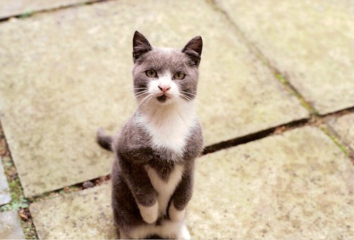 Meer-cat by GreyHobbit, on Flickr
