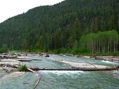 Water Under Log