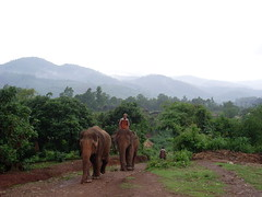 Thai Elephants (Krystal & Erik) Tags: trek thailand hike mai jungle chiang