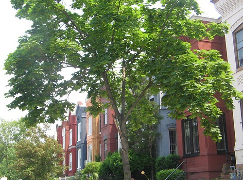 town houses of DC