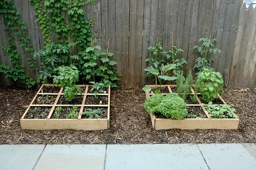 The Garden: Week 3