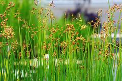 An abundance of green (DP Photography) Tags: flower macro conservatory soe herbarium newyorkbotanicalgardens debashispradhan dpphotography dp photography