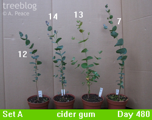 cider gums Nos. 7, 12, 13 and 14
