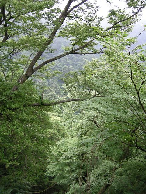 伊勢原の大山です