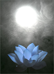 Blue Lotus Flower - Lotus Petals - IMG_0597 (Bahman Farzad) Tags: lotusflower lotus flower lotusflowers blue fog simulated sun smoke blueflower flowerblue     fleurdelotus lotosblume   yoga lotusflowerpetals lotusflowerpetal lotuspetals lotuspetal macro