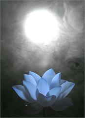Blue Lotus Flower - Lotus Petals - IMG_0597 (Bahman Farzad) Tags: blue sun flower macro yoga fog peace lotus smoke relaxing peaceful meditation therapy blueflower simulated  lotusflower lotusflowers lotuspetal flowerblue  lotuspetals  lotosblume fleurdelotus    lotusflowerpetals lotusflowerpetal