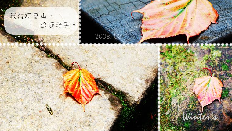 追逐秋天。-04