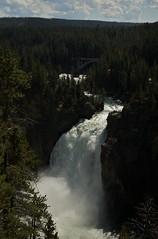 Yellowstone Canyon - Lower Falls