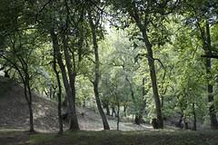 walnut forest (cienjaal) Tags: regenboog portretten bergen michiel reizen kleur vlees cien landschappen scoubidou kirgistan schelkens sonkul centraalazie