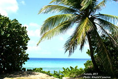 long bay tortola (loveli_one28) Tags: travel flowers st islands airport view thomas united ships virgin beaches waters british caribbean states tortola pristine