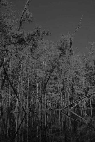 fisheating creek september 21 195
