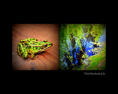 Frog : Pond Diptych