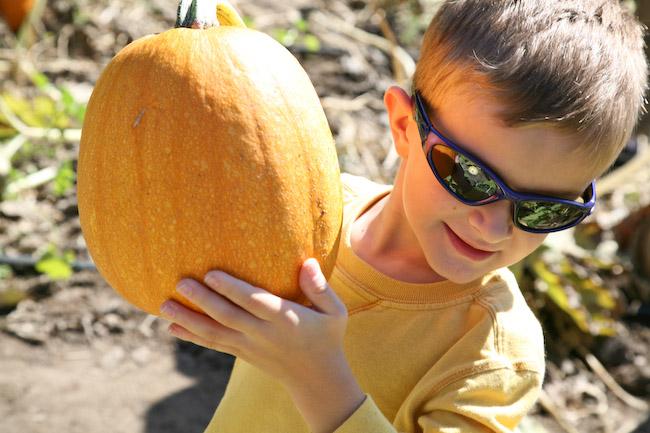 Julian Pumpkin Patch1