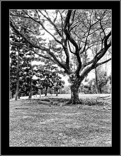 Tree at Titiwangsa