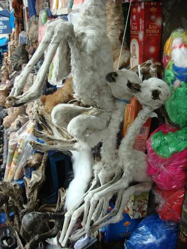 Llama foetus in La Paz' Witch Market...