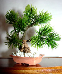 Bonsai, Miniature For Dollhouse, 1/12 Scale (Golden Unicorn Miniatures) Tags: flowers plants tree floral garden miniatures miniature bonsai oriental dollhouse dollshouse onetwelfthscale cdhm goldenunicornminis