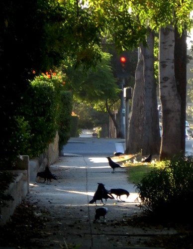 crow street