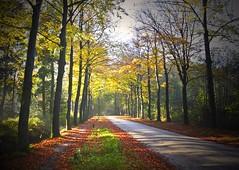 Herfst Autumn (Truus) Tags: autumn mist herfst morgen achterhoek ruurlo truus bladeren anawesomeshot aplusphoto goldstaraward