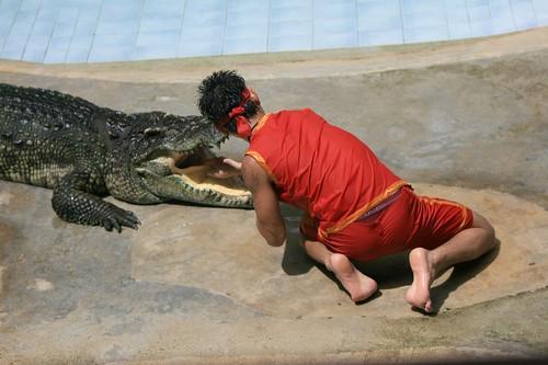 Crocodile show, Koh Kong