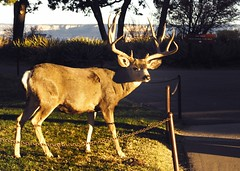 Canyon Deer (Pete Zarria) Tags: road trip travel vacation arizona signs southwest history oklahoma church station fun hotel nationalpark route66 neon catholic texas indian grandcanyon pueblo motel diner gas mission artdeco priest shamrock cliffdwelling reservation motels cliffhouse conoco franciscans nationalroad corvettestucson flagstaffkaibab