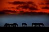 Antes dos bretes... (Eduardo Amorim) Tags: sunset brazil horses horse southamerica field brasil criollo caballo cheval atardecer caballos tramonto sonnenuntergang pôrdosol campo cavalos pelotas pferde cavalli cavallo cavalo pferd riograndedosul pampa poniente champ anoitecer coucherdesoleil campanha brésil chevaux entardecer crepúsculo 馬 américadosul poente amériquedusud лошадь 马 sudamérica suramérica américadelsur südamerika crioulo caballoscriollos criollos حصان tropillas flickrsbest costadoce americadelsud tropilhas tropilla crioulos cavalocrioulo americameridionale holidaysvacanzeurlaub caballocriollo favemegroup10 superfaveme auffangen theunforgettablepictures eduardoamorim cavaloscrioulos galleriadelamusa eduardoisagreatphotographer