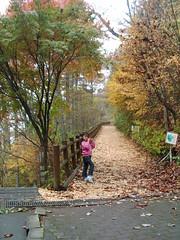 大滝の路セラピーロード 檜原都民の森