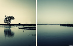 Gulf of Kutch (Hani Amir) Tags: sea india coast diptych gulf amir mangroves hani gujarat jamnagar kutch kutchh