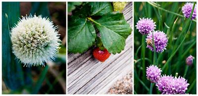 Garden Nov