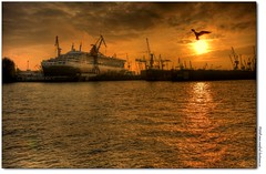 goldener hafen (manfred-hartmann) Tags: germany eos gold abend hamburg sigma hh 1020mm hafen möwe qm2 sonne hartmann soe queenmary2 hdr elbe manfred 40d mywinners