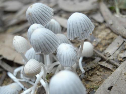 你拍攝的 62可愛的小野菇。