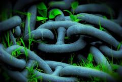 They've Chained Nature, but They Will Never Make It Sing