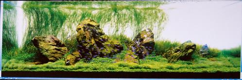 Amano Tank