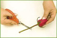 3050331924 82833a2b6d m d Faça você mesma: Arranjo de mesa de casamento com rosas