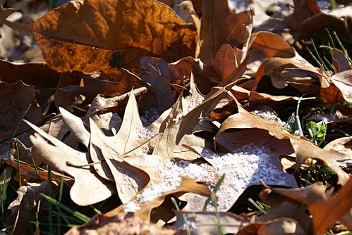 snowy leaves