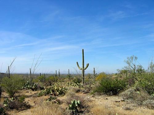 saguaro-5