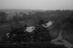 River in Warwick (Masha Rapunzel) Tags: winter bw fog forest river blackwhite warwick warwickcastle canon400d