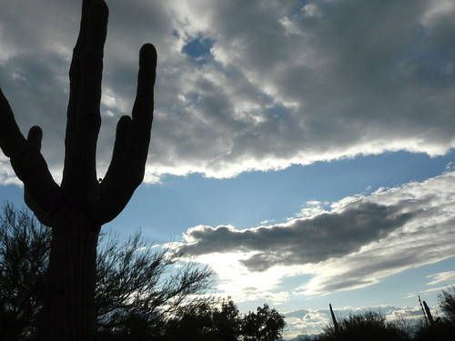 my arizona postcard