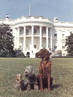 Nixon_dogs