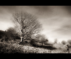 Stand Out (Finntasia) Tags: autumn tree perception heather bare hill dorset chapeau ferns magical bridport gorse thegoldengallery goldenphotographer diamondclassphotographer finntasia betterthangood eypedown vanagram goldenart reflectyourworld sensationalphoto artistictreasurechest nigelfinn