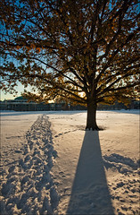 footprints and the tree