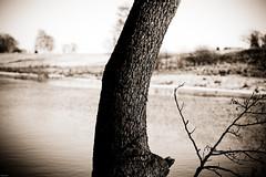 Between You and Me (b&w) (Rutger Blom) Tags: trees bw public water river skne bomen europa europe sweden skandinavien lv sverige scandinavia vatten trd scania zweden rivier skane flod ldde kvlingen