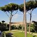 Blick aus dem Forum Romanum