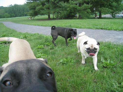 O Hai: Ithaca Dog Park