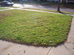 front yard leaves 2 after