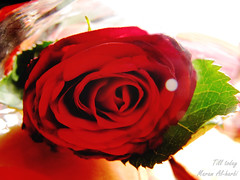 """()"""""""""""" (Till Today ,, Maram Al-Harbi) Tags: canon till today   flowere        maram        alharbi    al7arbi    maramal7arbi"""