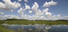 FLORIDA EVERGLADES 4 (chrisfergusonworks) Tags: clouds canon300d florida everglades 1020mm