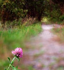 Along the path (James Jordan) Tags: trees woods path journey destination clover decision choose splitfocus snall blendedphoto