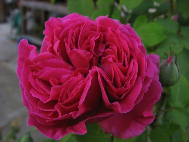 garden4-08 010