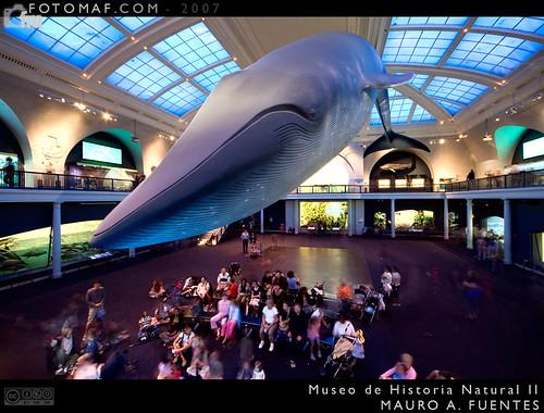 Museo Historia Natural 2