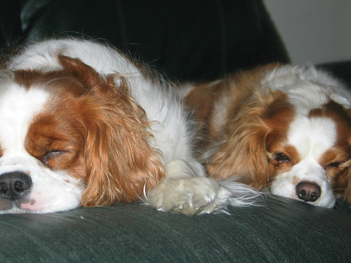sleepingdoggies